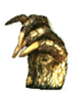 Alligator-Foot-at-Lucky-W-Amulet-Archive